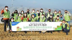 농협유통, 남양주서 농촌 일손돕기 '구슬땀'